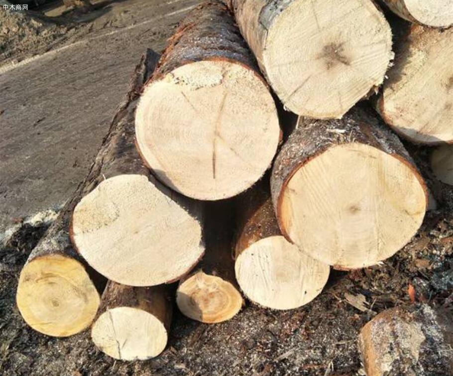 云杉的优点和缺点及云杉木材的用途介绍