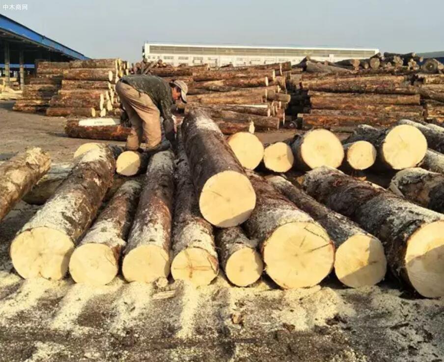 云杉的优点和缺点及云杉木材的用途介绍价格