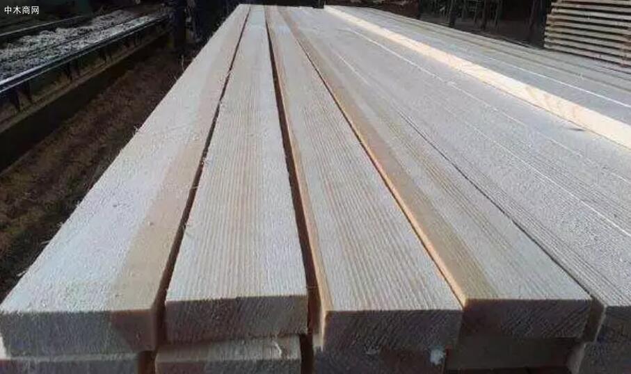 云杉的优点和缺点及云杉木材的用途介绍厂家