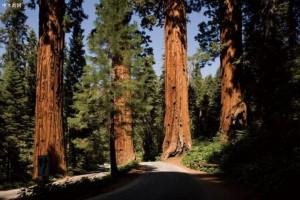 广西融安香杉木年可采伐量60万立方米以上