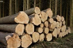 美国西海岸木材价格全线下跌,暴跌近30%