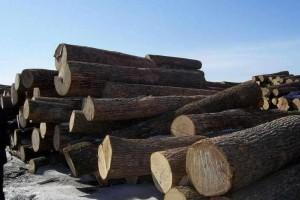 首批北极入驻木材工业企业准备落实项目