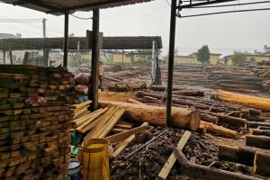 出售松木建筑木方