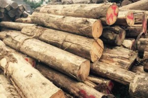 东北林产品国际木业中心建设高点起步