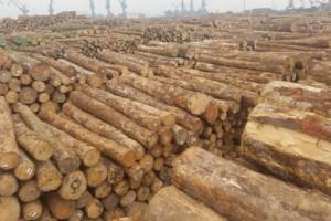总投资4.5亿元!海南中顺打造国际木材产业园