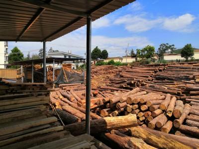 出售云南松木锯材,建筑木方生产厂家