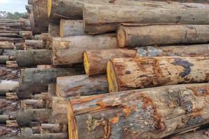 西澳大利亚州木材公司瓦里德停止了向中国的出口木材