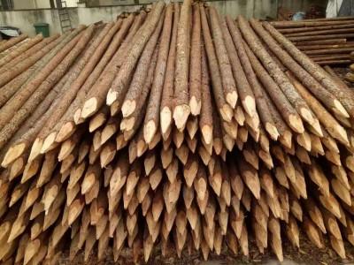 上海杉木桩报价厂家直销长期大量批发