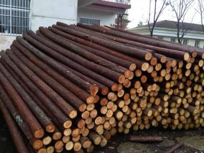 专业批发4米杉木桩价格质优价廉