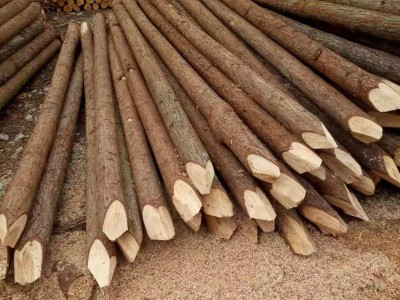 江苏杉木桩林场直销长期大量批发