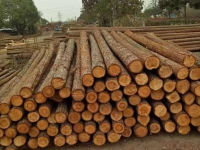 河道用杉木桩价格表