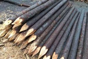 宣城盛平木业上海杉木桩杉木杆高清图片