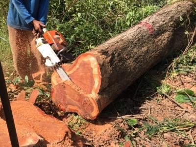 泰国红花梨木原木多少钱一吨?