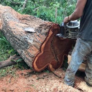 泰国红花梨木原木十大品牌排名