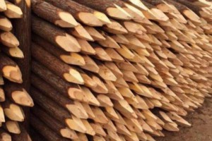 杉木桩需要做防腐处理吗?