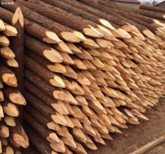一般河道打桩杉木桩到水里可以用多少年价格