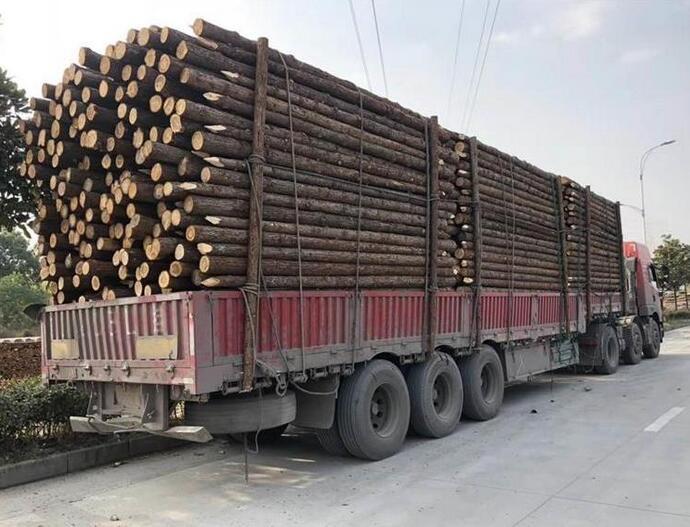 一般河道打桩杉木桩到水里可以用多少年品牌