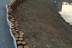 一般河道打桩杉木桩到水里可以用多少年?