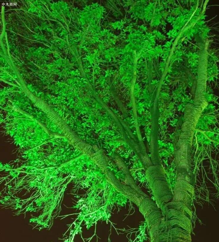 好看又奇特的树木