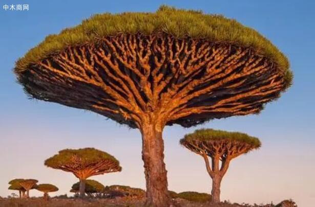 树木什么成语