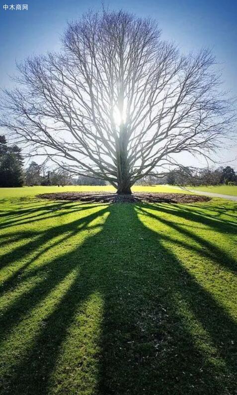 树木名称大全