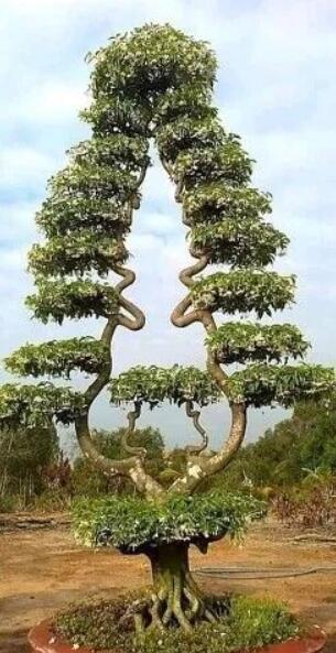 哪些树有奇特之处