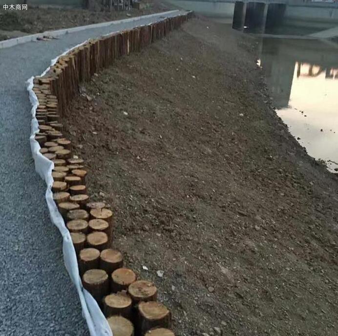 杉木桩是干什么用的及在水下使用多少年厂家