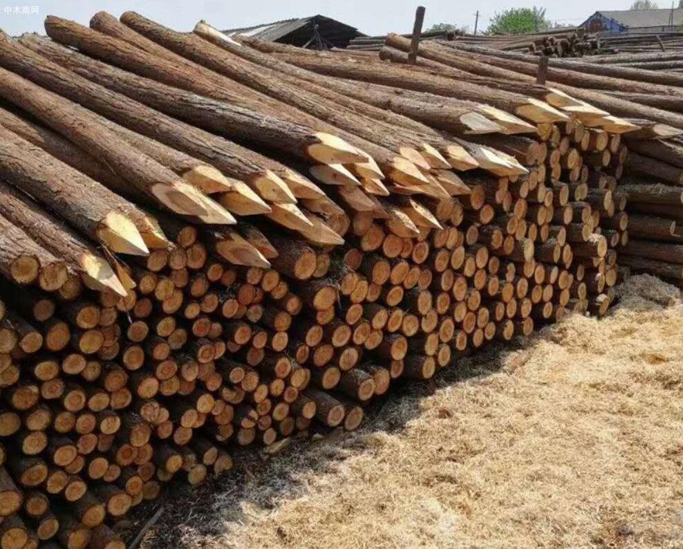 一般杉木桩价格多少钱一方及单价多少钱一个价格