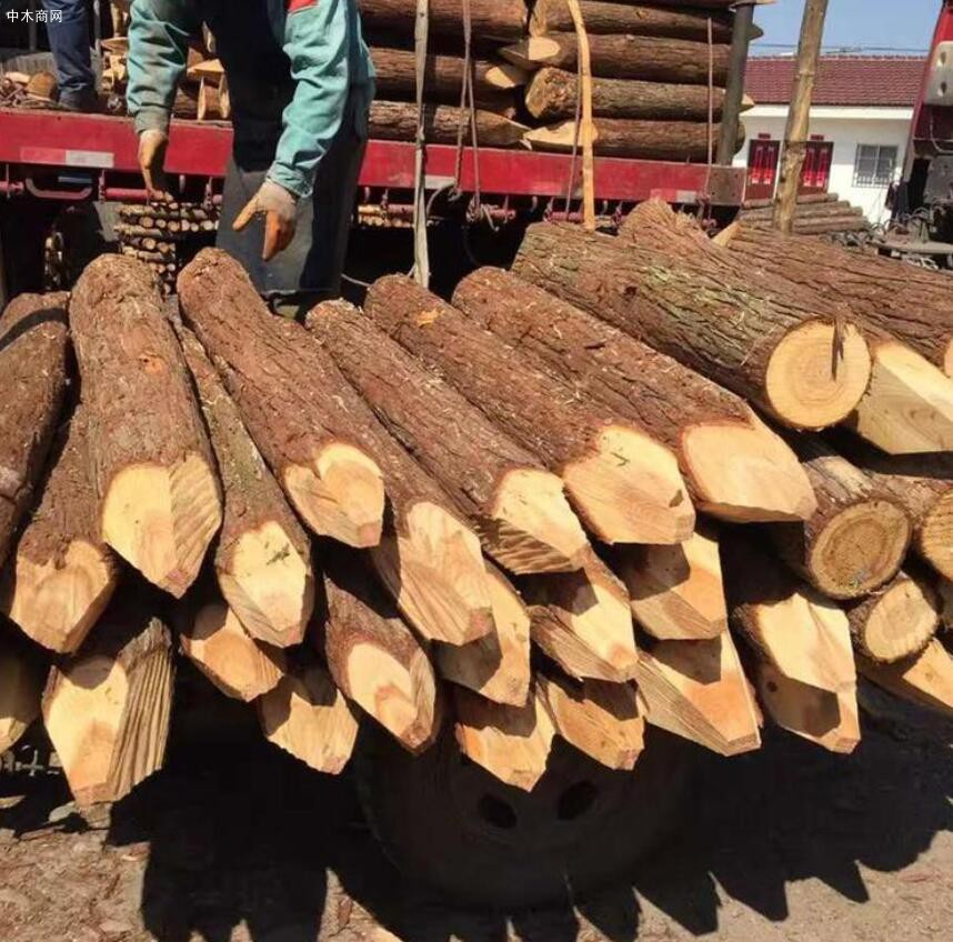 盛平木业杉木桩规格和价格图片品牌
