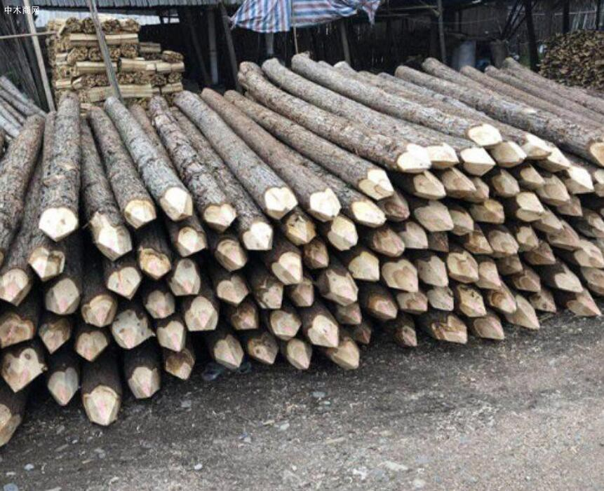 盛平木业杉木桩规格和价格图片供应