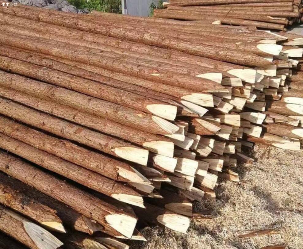 盛平木业杉木桩规格和价格图片采购