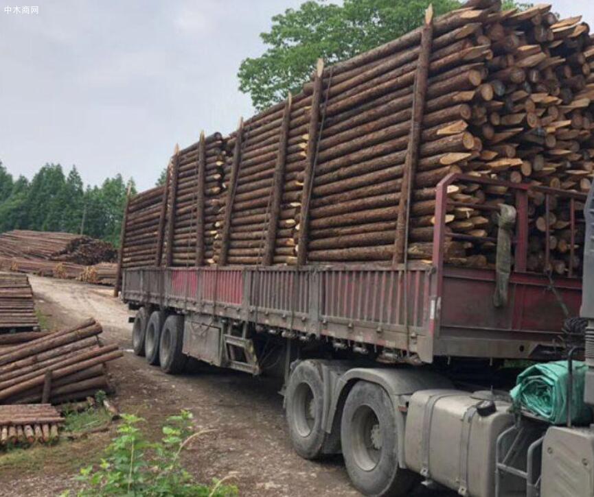 盛平木业杉木桩规格和价格图片批发