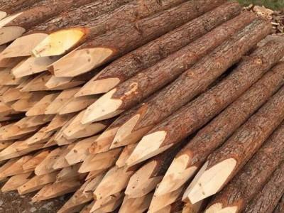 杉木桩多少钱一个立方?