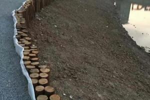 杉木桩到水里可以用多少年?