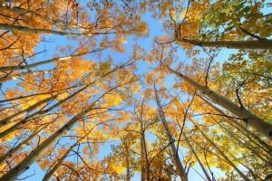 美国木材品种有哪些?