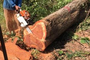 泰国红花梨木材的优缺点有哪些?