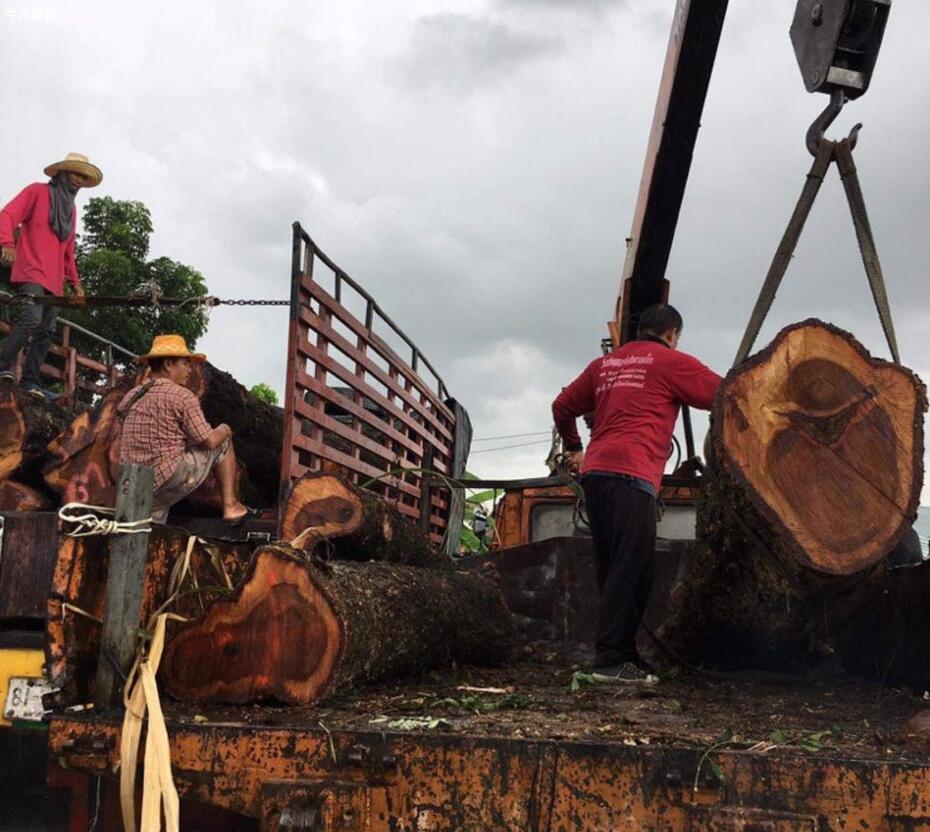 泰国红花梨木原木原产地今日最新报价图片