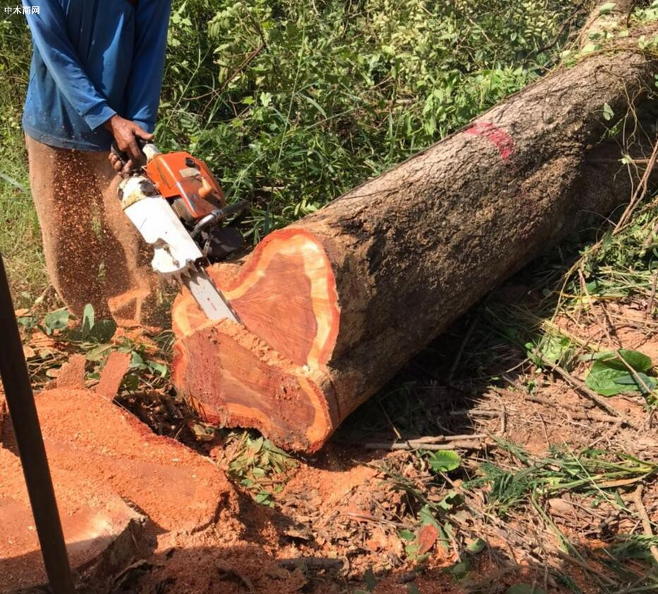 泰国红花梨木原木原产地今日最新报价品牌