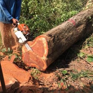 2020泰国红花梨木原木十大品牌排行榜