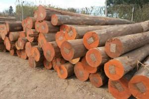 巴西木材及木制品出口大幅增长