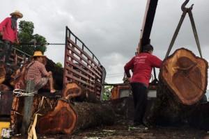 泰国红花梨原木价格多少钱一吨?