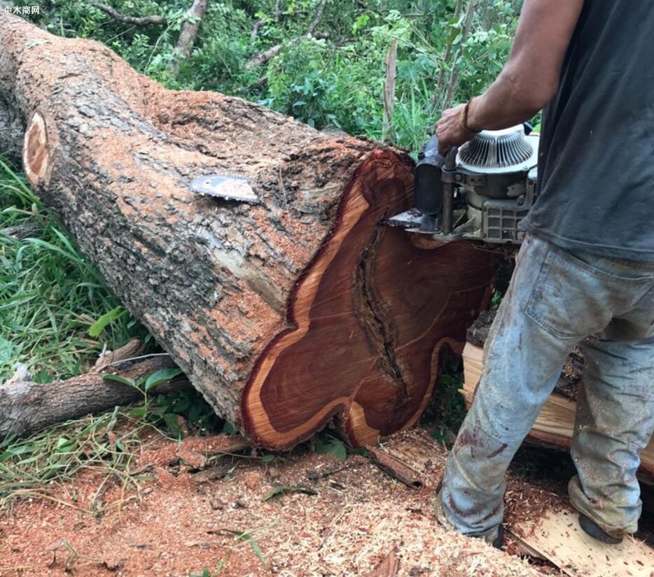 泰国红花梨原木价格多少钱一立方米图片