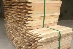 杉木桩是什么树及杉木桩是干什么用的?