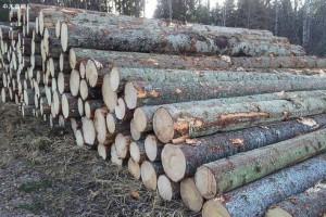 如皋海关助力进口木材大幅增长