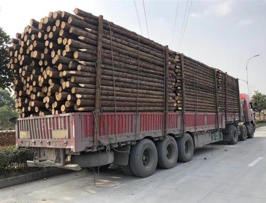 上海河道杉木桩多少钱一根批发