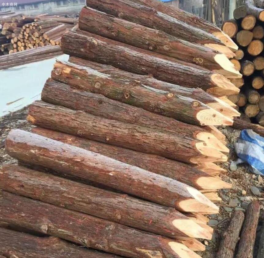 上海河道杉木桩多少钱一根图片