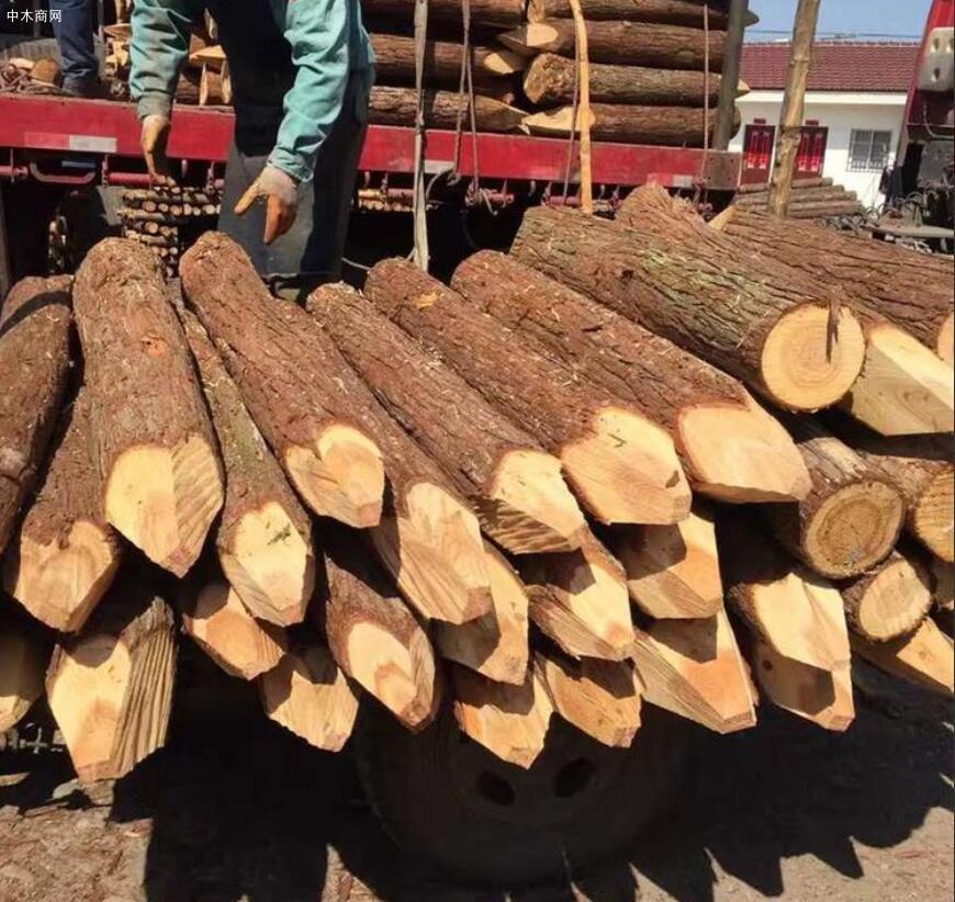 上海河道杉木桩多少钱一根厂家