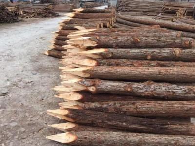 江苏河道杉木桩生产厂家批发价格
