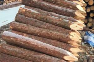 上海河道杉木桩高清图片