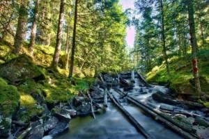 瑞典森林虫害影响小于欧洲中部地区